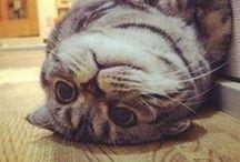 Cats Cats Cats / Yep, we love kitties too! / by DogVacay