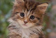 hey kitten