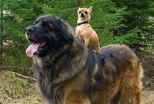 Ultimate Big Dog Board / Big dogs run the world!   But at the end of the day, all they want is cuddles.