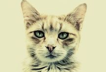 cat, cats & cats