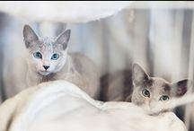 CATS / by Giselle Azevedo