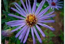 Flowers to grow / by Erin Sievert