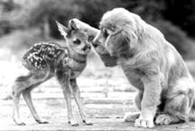 ANIMALS & PETS / by Stephanie Tackett