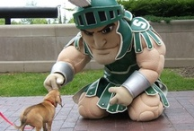 Sparty On  / Anything Michigan State University