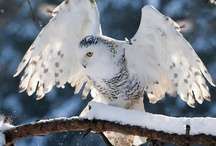 Feathered Friends / by Heather Tetreault