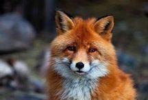 Favorite Animals / by Scott Strunk