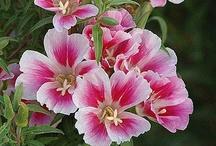 Flowers / by Carmela Romano