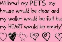 Animals: pets / by Anita Wood