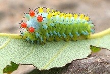 Animals: Invertebrates; caterpillars, etc.