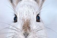I <3 bunny