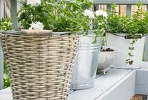 Vegetable Gardening / Practical tips and advice for Vegetable Gardening for beginners. Vegetable garden layout ideas and design for beginners.