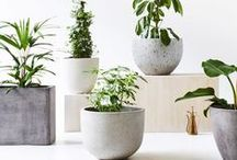 Homelife - Pot Plants / Create a portable garden or indoor oasis with plants in pots.