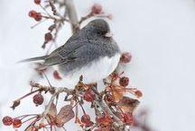 winter / by Marie Marius
