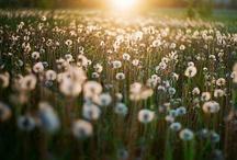 What a Wonderful World / by Sabina Anne