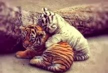 Animals / Aren't they cute and/or amazing >.<