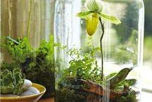 Grow a Terrarium