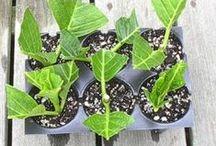 Sustainable & DIY Garden
