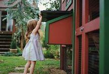 chickens / by Kristine Halsey