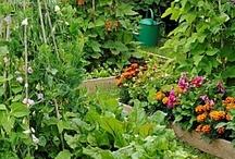 vegetable garden, potager garden / cottage garden, vegetable garden potager, victory garden, / by andie jay