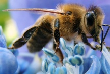 bees and pollinators / by andie jay