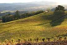 Napa & Sonoma Valleys / California Wine country is lush valleys, audacious views, and diverse growing regions. Brilliant, gorgeous, mystical, steeped in history, and with over 400 wineries.