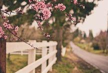 Spring Planting/Sprucing / by Jeni Lane-Melton