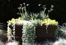 Container gardening, landscaping / container arrangements for southern USA  / by andie jay