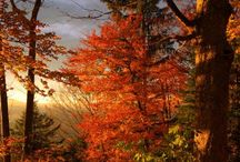 Fall... In love / Red and yellow leaves. Layers of clothes. Coffee.  Favorite season of the year. Fall in love with Autumn. Just like I did..