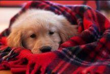 Snuggle / by Erin Pierce