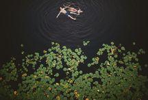 Photography / by Elena van Hove