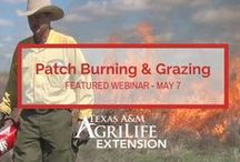 Agrilife Extension News / Links to event information and news stories from the Texas A&M AgriLife Extension Service and other reputable online sources.