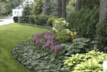 Home: Landscaping / Landscaping ideas