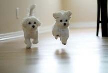 Puppy Luv / by Carolyn Pivarnik