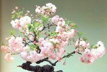 ♥ bonsai / by susana