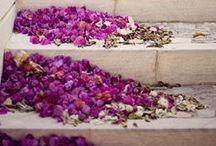Palette {Purple} / by Paper Moss