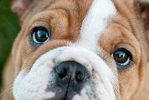 Puppies / by Jenny Escobell