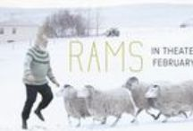 Rams / Icelandic film at its best! http://cohenmedia.net/films/rams / by Cohen Media Group
