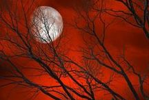 Red Red Red / by Jennifer Wardlow