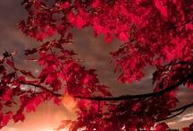 Fall...so magical:)