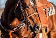 Horses / by Shyra Howard