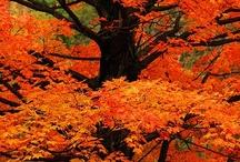 Orange My Favorite Color / by Cindy Williams Logan