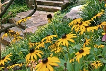 DC Spaces | Gardens / Ah, the bliss of a garden. The Washington area is full of them. From the condo's porch to acres upon acres, plants are everywhere.