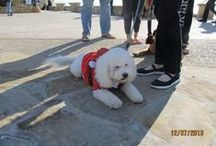Santa's Doggie Parade / Santa's Doggie Parade in Avila Beach