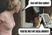 <3 my cat!