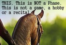 Horses! My loves! / by Shelby Jackson