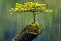 Trees  of Life / The resilience and ages of trees amaze me  / by Kay Hires Bronson
