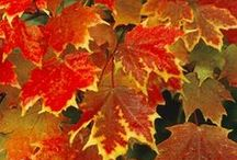 Legends of the FALL / The beauty and calmness of everything Fall.