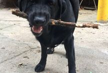 Dogs with Sticks