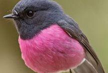 Wind benenth my Wings / Little Fat Birds