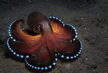 Under the Sea / Things from the Deep Blue Sea